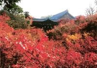 Tsuutenkyou