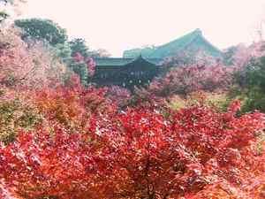 Toufukuji